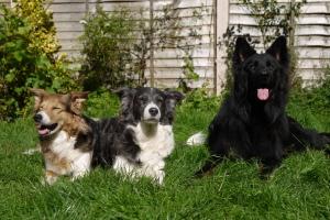My doggy family