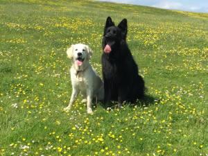 Nala and Ozzy